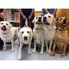Park La Brea Veterinary Care